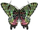 Insects - Butterflies