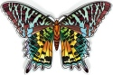 Amia 42835N Madagascan Sunset Moth Magnets