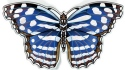 Amia 42838N Mexican Bluewing Magnets