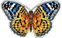 Amia 42843N Indian Fritillary Magnet