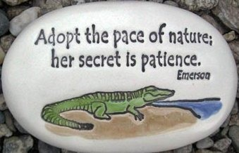 August Ceramics R336 Adopt the pace of nature with alligator artwork Rock