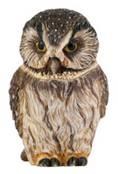 Pot Bellys PBZOW9 Boreal Owl