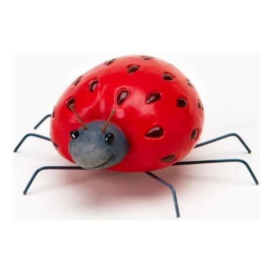 Home Grown 4017228 Strawberry Ladybug