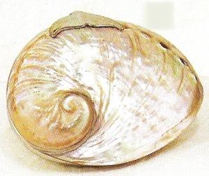 Kubla Crafts Bejeweled Enamel KUB 5423 Abalone