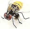 Kubla 5651 Bee Set of 12 Pic V