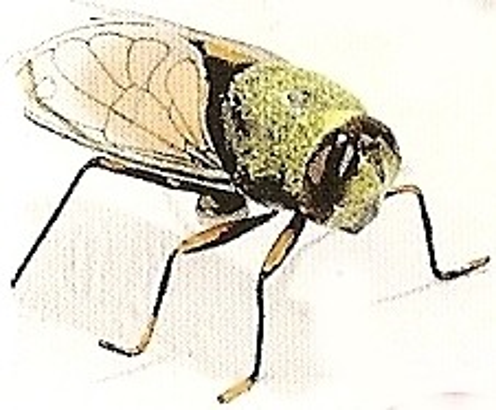 Kubla 5652 Bee Set of 12 Pic J