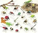 Kubla 5600B Insect Magnets Set of 48 Garden Bug Magnets
