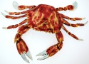 Kubla Crafts Cloisonne KUB 7-4160 Cloisonne Extra Large Crab Ornament