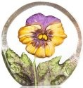 Maleras 88216 Miniature Pansy Yellow Purple