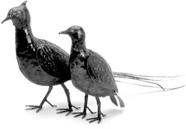 Birdwoods BWD202 Pheasant Hen
