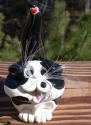 Pence Cats BCSHFoldBlackWhite Folded Ears Black & White Short Hair