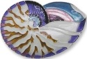 Zarah Co Jewelry 2121Z2 Nautilus Shell Pin Brooch