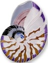 Zarah Co Jewelry 2121Z2P Nautilus Shell Pendant on Chain